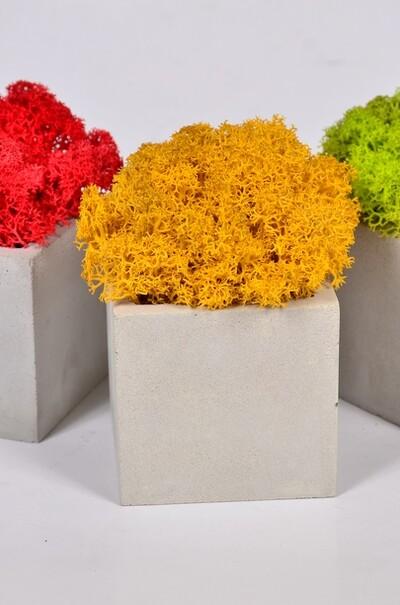 """Кашпо """"Куб""""с декором разноцветного мха"""