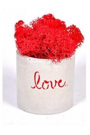 Мох в бетонном кашпо Любовь