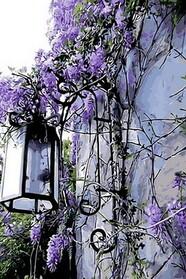 Сиреневый фонарь