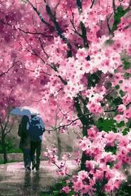 Сакура под дождем